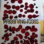Reusing Valentine's Flowers