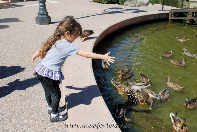 Child feeding duck