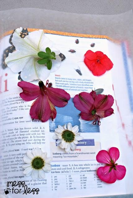 press flowers