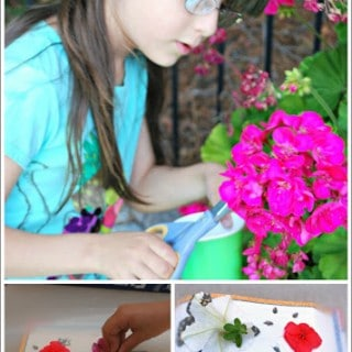 Pressing Flowers with Kids