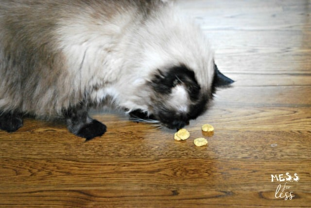 cat eating catnip treats