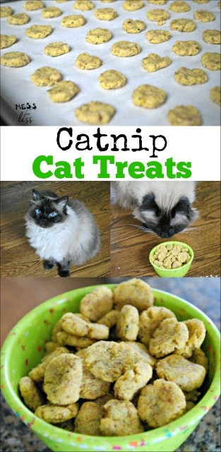 Catnip Cat Treats Recipe Mess For Less