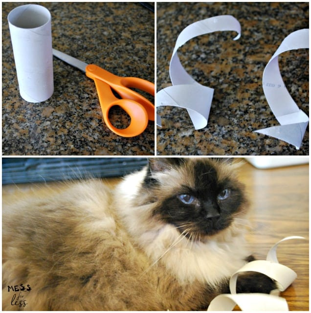 Diy cat toys mess for less for Diy cat wand