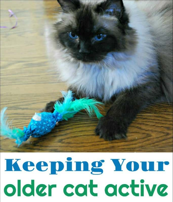 How to Keep Your Older Cat Active. Help your feline friend feel young no matter their age. #ad @morristhe9livescat @morrisapproved