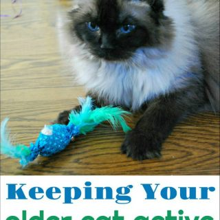 How to Keep Your Older Cat Active