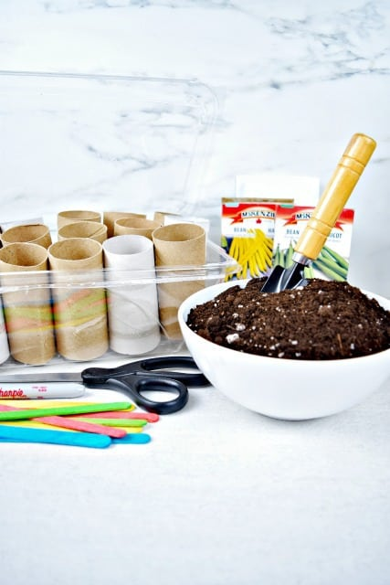 toilet paper rolls and potting soil